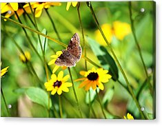 Butterfly And Yellow Flowers Acrylic Print by Carlee Ojeda