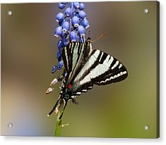 Butterfly Delight Acrylic Print by Lara Ellis