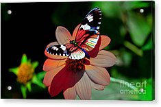 Butterfly Dont Fly Away Acrylic Print by Marvin Blaine