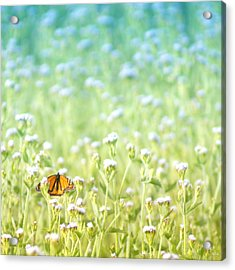 Butterfly Dreams Acrylic Print by Holly Kempe
