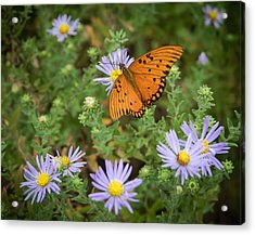 Butterfly Garden Acrylic Print by James Barber