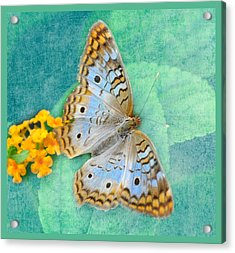 Butterfly In Blue Acrylic Print by Diane Wood