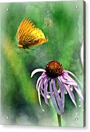Butterfly In Flight Acrylic Print by Marty Koch