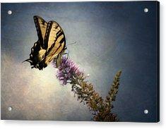 Butterfly Landing Acrylic Print by Jeff Burton