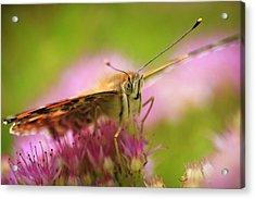 Butterfly Macro Acrylic Print by Adam Romanowicz