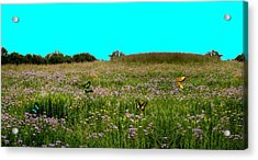 Butterfly Meadow Acrylic Print by Larry Trupp