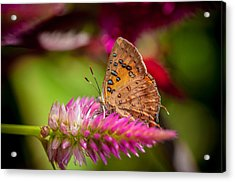 Butterfly Pink Sparkle  Acrylic Print by Isabel Laurent