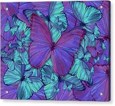 Butterfly Radial Violetmorpheus Acrylic Print by Alixandra Mullins