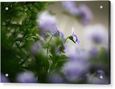 Butterfly's Dream 4 Acrylic Print by Afrison Ma