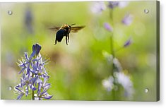 Buzz Off Acrylic Print by Annette Hugen