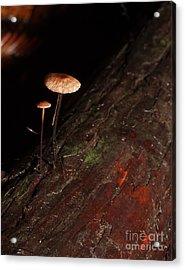 C Ribet Mushroom And Fungi Art The Sage Acrylic Print by C Ribet