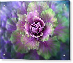 Cabbage Flower Acrylic Print by Jessica Jenney