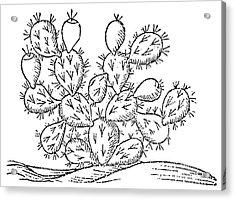 Cactus, 1547 Acrylic Print by Granger