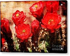 Cactus Flowers Acrylic Print by Julie Lueders