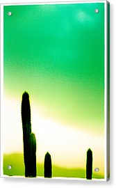 Cactus In The Morning Acrylic Print by Yo Pedro