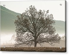 Cades Cove Tree Acrylic Print by Phyllis Peterson
