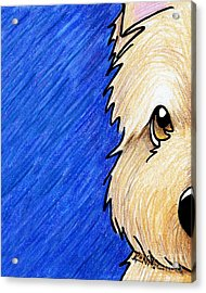 Cairn Terrier Up Close Acrylic Print by Kim Niles