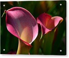 Cala Lilies Light And Shadow Acrylic Print by Sandi OReilly