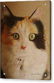 Calico Cat Acrylic Print by Savanna Paine