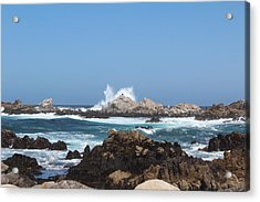 California See Harbor  Acrylic Print by Elena Wells