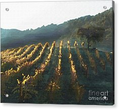California Vineyard Series Wine Country Acrylic Print by Artist and Photographer Laura Wrede