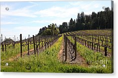 California Vineyards In Late Winter Just Before The Bloom 5d22167 Acrylic Print by Wingsdomain Art and Photography