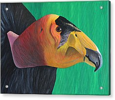 Californian Condor Acrylic Print by Aileen Carruthers