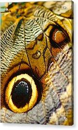 Caligo Atreus Acrylic Print by Floyd Menezes