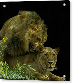 Call Of The Wild 2 Acrylic Print by Ernie Echols