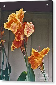 Calla Lily Acrylic Print by Fred Jinkins
