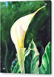 Calla Lily Acrylic Print by Irina Sztukowski