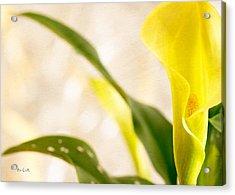 Calla Lily Two Acrylic Print by Bob Orsillo