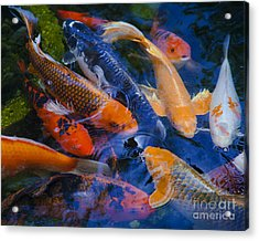 Calm Koi Fish Acrylic Print by Jerry Cowart