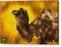 Camel In Desert Sun Acrylic Print by Jack Zulli