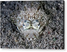 Camouflaged Flathead Fish Acrylic Print by Ethan Daniels