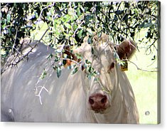 Can You See Me Now? Acrylic Print by Dorothy Menera