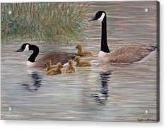 Canada Goose Family Acrylic Print by Kathleen McDermott