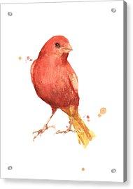 Canary Bird Acrylic Print by Alison Fennell