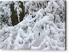 Candy Floss Snow Acrylic Print by David Birchall
