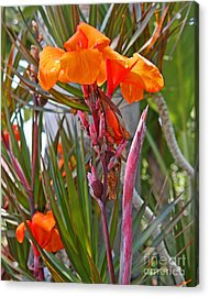 Canna Lily With New Growth Acrylic Print by Kenny Bosak