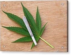Cannabis Cigarette And Leaf Acrylic Print by Adam Hart-davis