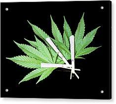 Cannabis Cigarettes And Leaves Acrylic Print by Adam Hart-davis