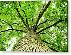 Canopy Acrylic Print by Greg Fortier