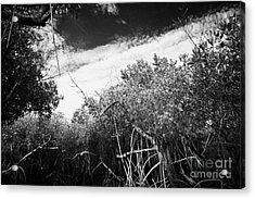 Canopy Of The Mangrove Forest In The Florida Everglades Usa Acrylic Print by Joe Fox