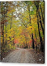 Canopy Of Yellow Acrylic Print by Marty Koch