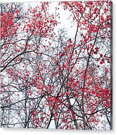 Canopy Trees Acrylic Print by Priska Wettstein