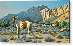 Canyon Country Paints Acrylic Print by Paul Krapf