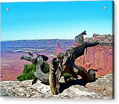 Canyon Lands National Park Acrylic Print by Susan Leggett