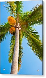 Capistrano Palm Tree - Digital Photo Art Acrylic Print by Duane Miller