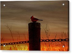 Cardinal At Sunset Acrylic Print by Larry Trupp